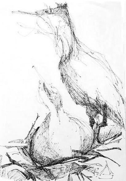 Cormorants on the Nest