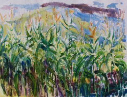 Linda's Corn Field