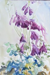 Purple Columbine, 14x21 in.
