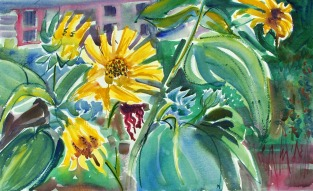 Sunflowers before Ella's