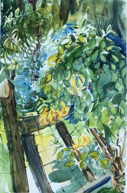 Honeysuckle on Fence Post, Clermont State Park, wc, 21x14 in.